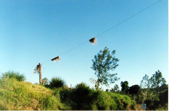 Febuary 1999 - Taken by Ross Portas