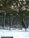 Snow at Girraween National Park (Stanthorpe)