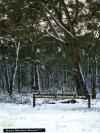 Snow at Girraween National Park (Stanthorpe)