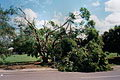 St Mary's Park (storm damage from the April 10 1998 severe storm) - Taken by Adrian Grulte